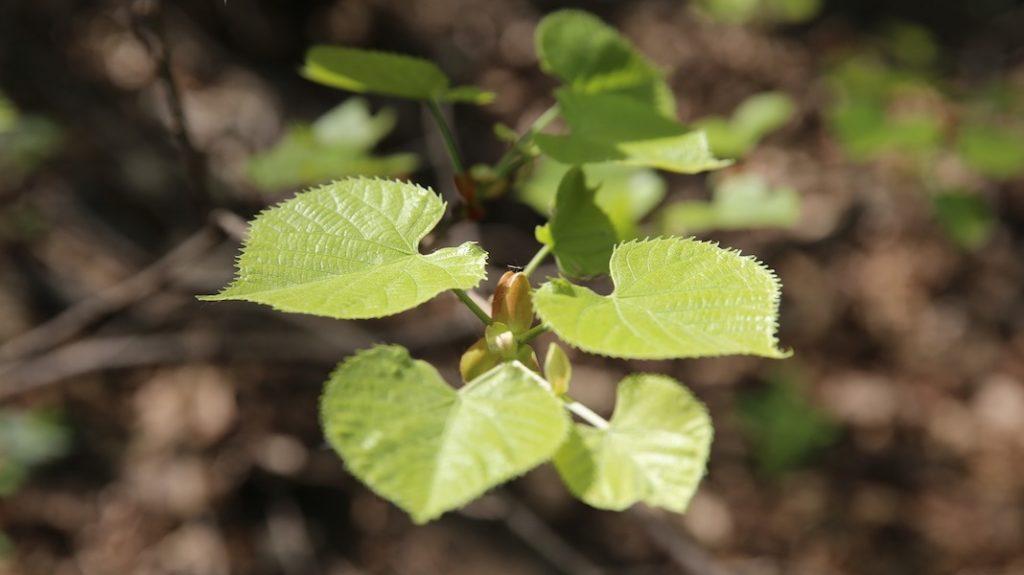 plant-2992186_1920