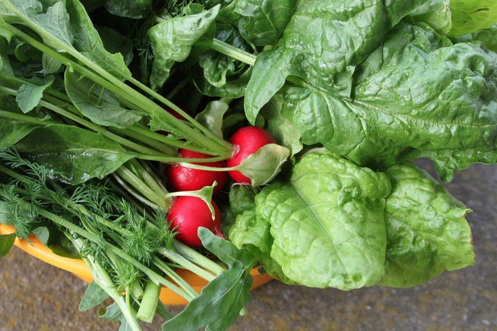 senior24h-nowalijki-wiosna-warzywa-zdrowie