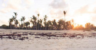 Nutka przyjemności – Wilki – Bohema